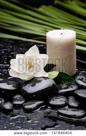 gardenia with candle ,palm on black pebbles