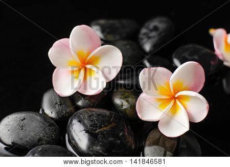 still life with pebble and with frangipani