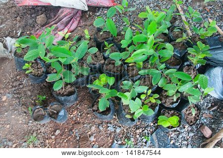 Young seedlings in jiffy pots at plant shop