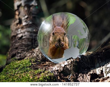 Ball Sphere in the woods on moss. Reflection - animal protein. The concept of animal welfare the preservation of endangered species endangered animals ecology