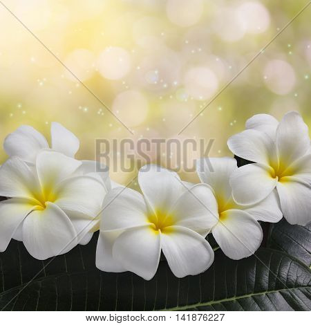 Sweet Flower Frangipani Or Pumeria Bunch And Green Leaf On Bokeh