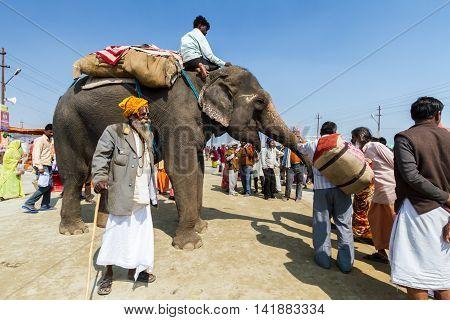 An Elephant At The Kumbha Mela, India.