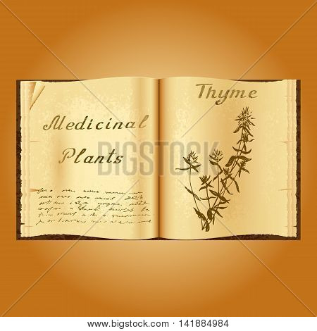 Thyme. Botanical illustration. Medical plants. Old open book herbalist. Grunge background. Vector illustration
