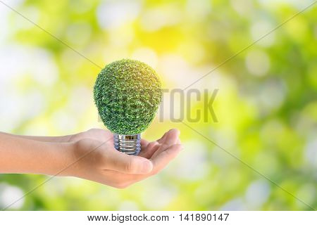 Human hands holding the energy saving lamp of tree on green nature background.Concept for saving energy, global warming, Earth Day, Go Green and save the world.