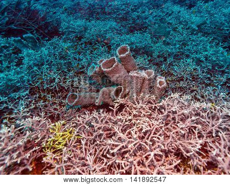 Colorful Tropical Reef Landscape