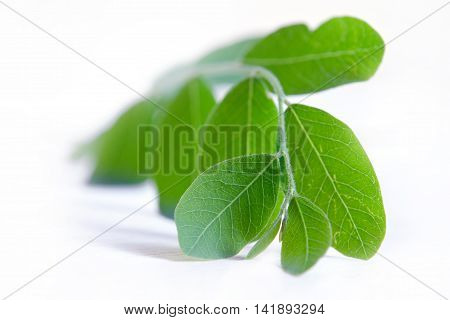 Moringa Leaf Isolated On White