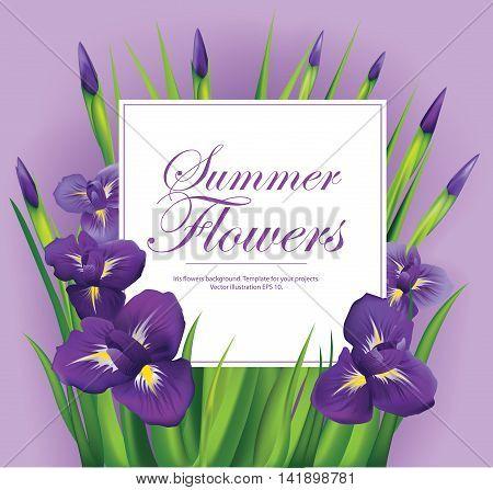 Iris flowers frame on violet background. Vector illustration.