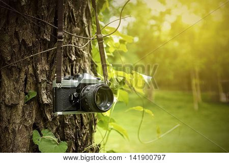 image old camera hanging on a tree.