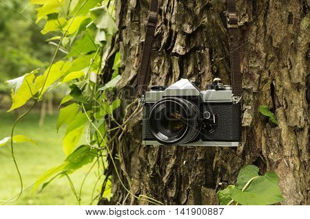 Old camera hanging on a tree. sepia style image.