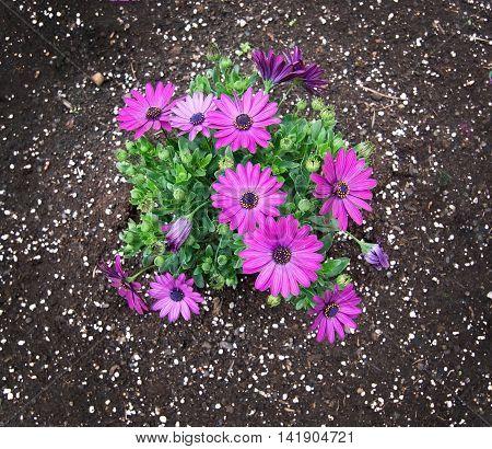 Pink Purple Spring Flowers