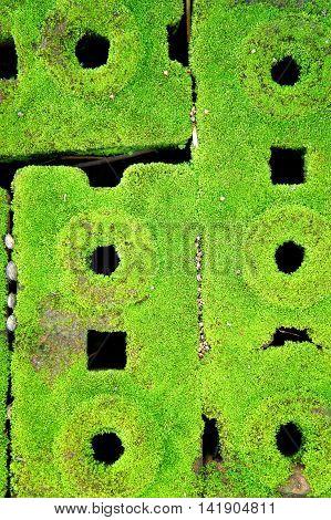 Moss brick, Moss grows in moist areas.