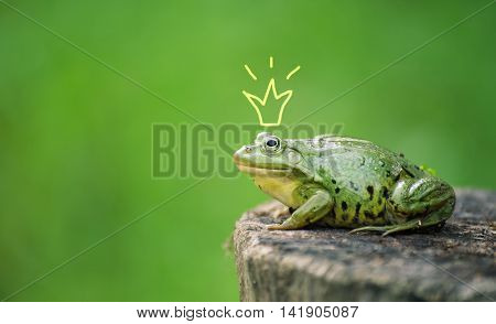 Cute frog princess or prince. Toad painted crown, shooting outdoor.