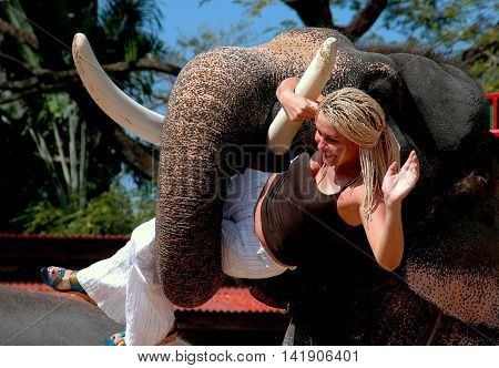 Pattaya Thailand - December 31 2005: Smiling woman waves as she is hoisted aloft in an elephant's trunk durng the daily elephant show at Nong Nooch Tropical Gardens