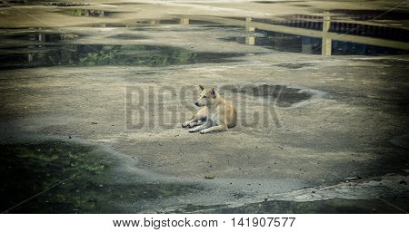 old dog sit for waiting his boss on cement floor with vintage filter - can use to display or montage on products