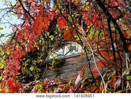 The mysterious box on the background of autumn leaves.