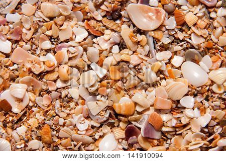 sand of small shells on the coast as background close-up.