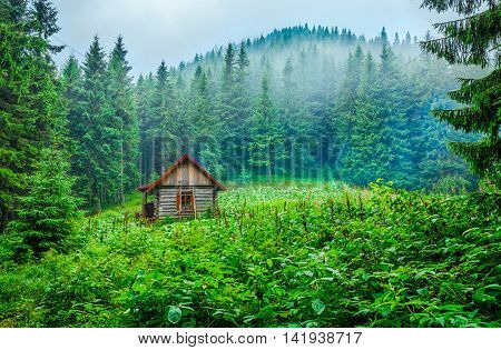 Lonely ecological wooden house blockhouse shelter at green glade in foggy pine forest among mountains and misty clouds carpathians landscape