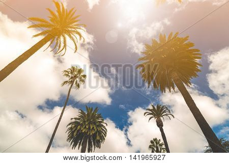 Palm tree in Beverly Hills, California, USA