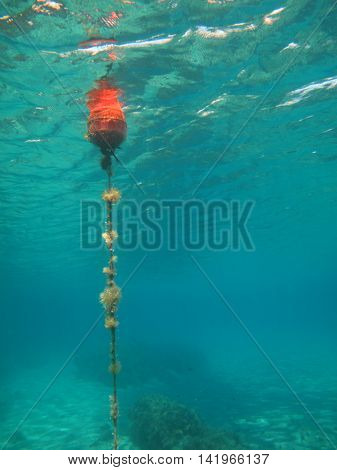 vertical image of a buoy alert sign underwater