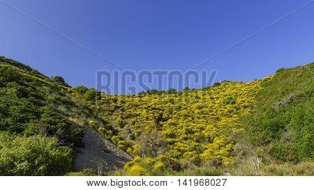 Beautiful Yellow Wild Flower