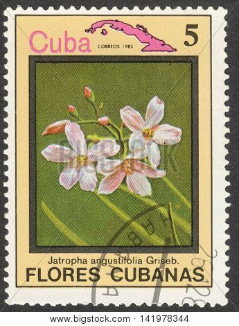MOSCOW RUSSIA - CIRCA MAY 2016: a post stamp printed in CUBA shows Jatropha angustifolia flower the series