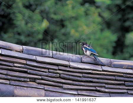 Bird on the roof