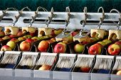 Clean and fresh apples on conveyor belt in food processing facility ready for automated packing. Healthy fruits food production and automated food industry concept. poster