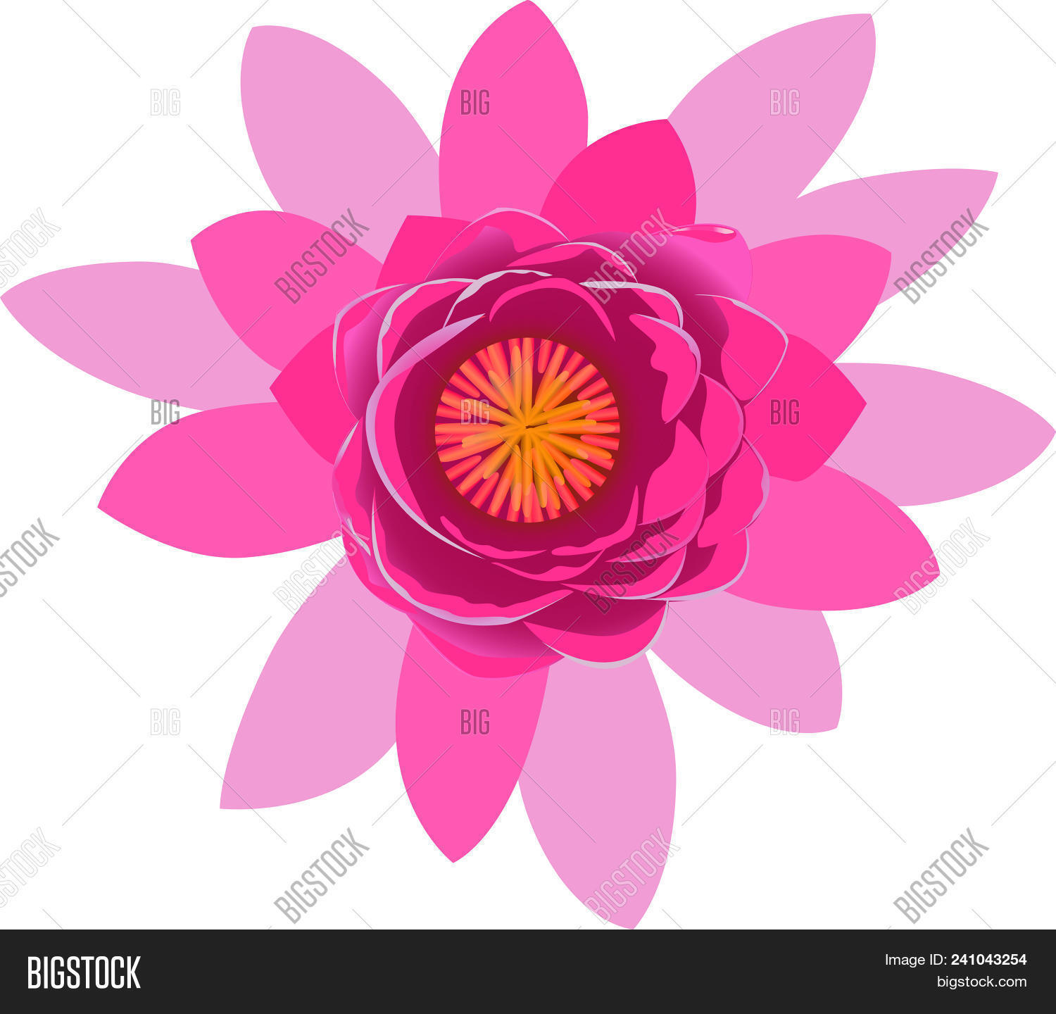 Beautiful pink lotus vector photo free trial bigstock beautiful pink lotus flower blossom isolated on white background colorful bloom nature vector illus izmirmasajfo