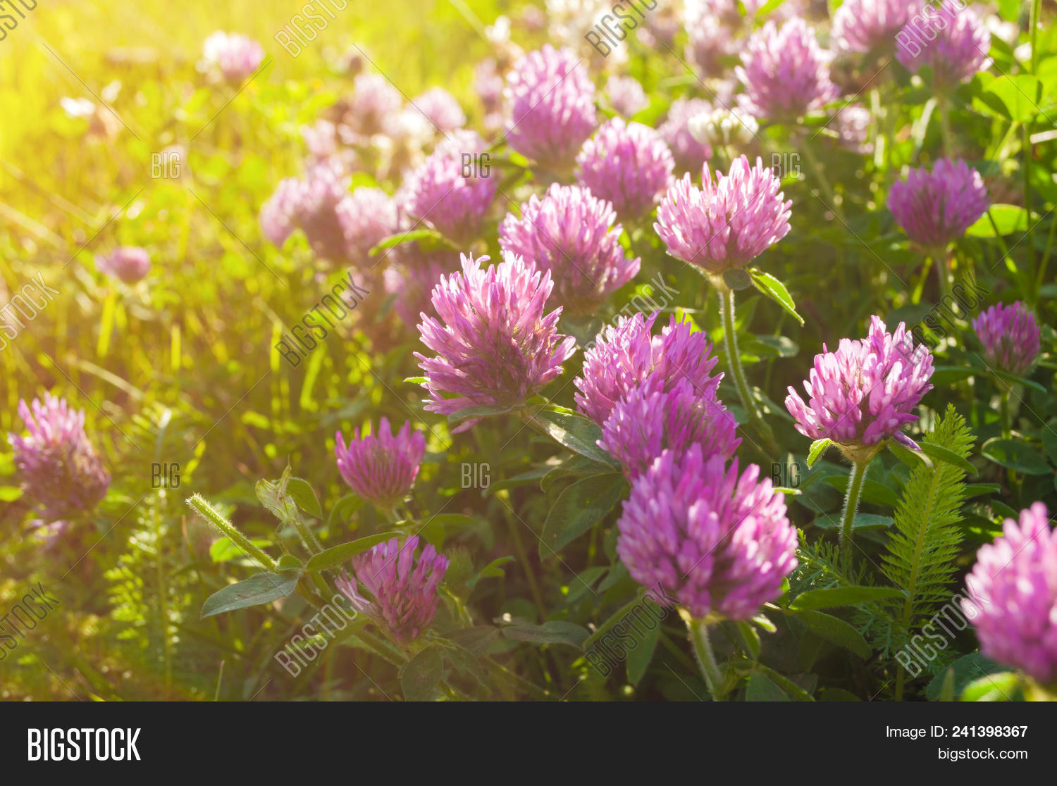 Pink Summer Flowers Image Photo Free Trial Bigstock