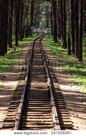 Railway In The Beautiful Forest Of Pines And Penetrating Rays Of The Sun In The Summer