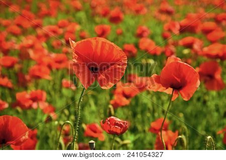 Remembrance Day, Anzac Day, Serenity. Remebrance Day Memorial Day Narcotics