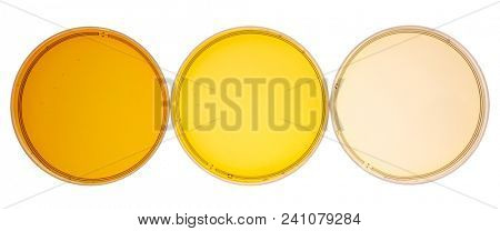sampler of pure maple syrup (golden, amber and gold) - three small glass bottles on a ceramic isolated bowl (Petri dishes), to view