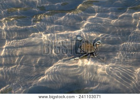 Hermit Crab On Sand Under A Shallow Sea Water With Sunlight Reflections On The Surface Of The Water.