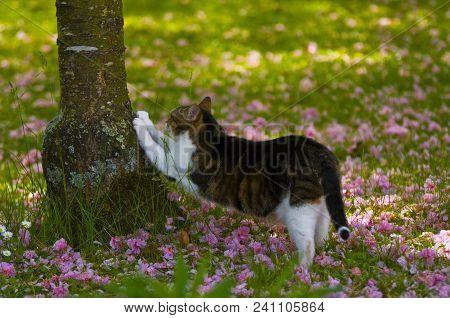 Car Scratch Fever: Cat Scratching A Tree, France