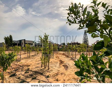 Newly Planted Trees On A Farm Are Watered With A Irrigation System Seeking Efficiency In A Time Of D