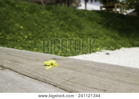 Yellow Petal Falled On Wooden Bench In Garden, Stock Photo