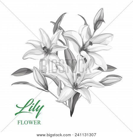 Realistic Pink Lily Flower Bouquet. Floral Elements With Open Blooming, Closed Blossoms Green Leaves