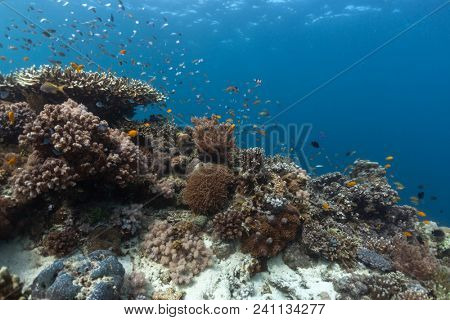 Coral reef with natural colors. Underwater shot of coral reef full of fish and different corals. Shot under natural light contition. Philippines.