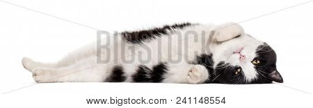 Mixed-breed cat lying against white background