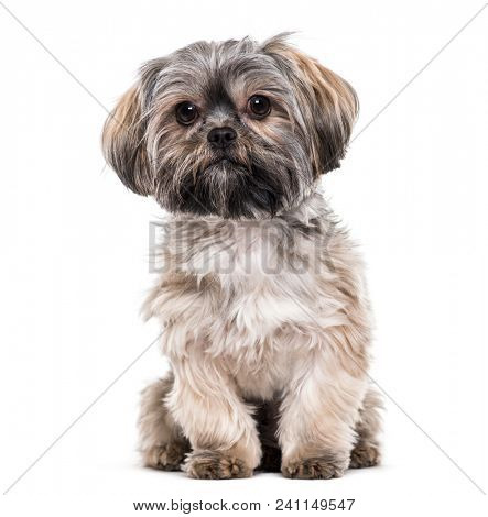 Mixed-breed dog , 10 months old, sitting against white background