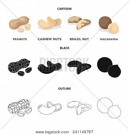 Peanuts, Cashews, Brazil Nuts, Macadamia.different Kinds Of Nuts Set Collection Icons In Cartoon, Bl