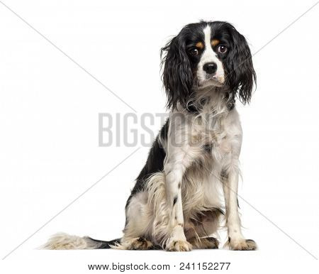 Mixed-breed dog , 1 year old, sitting against white background