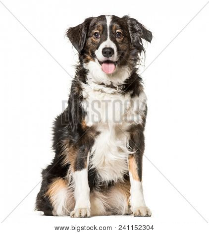 Mixed-breed dog , 5 years old, sitting against white background