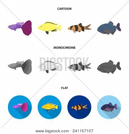 Botia, Clown, Piranha, Cichlid, Hummingbird, Guppy, Fish Set Collection Icons In Cartoon, Flat, Mono