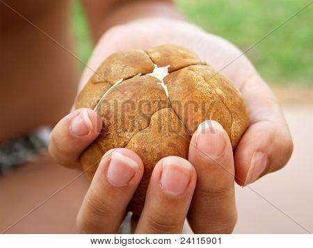 Peeled Exotic Palm Seeds