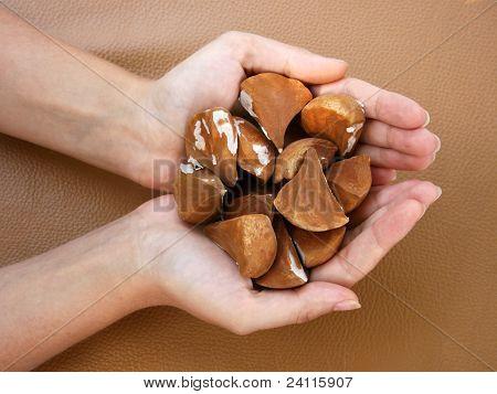Female Holding Palm Seeds