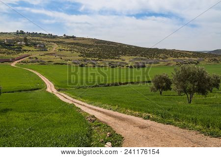 Fresh Country With Green Fields And Olive Trees During The Spring In Morocco, Close To Fez. Country