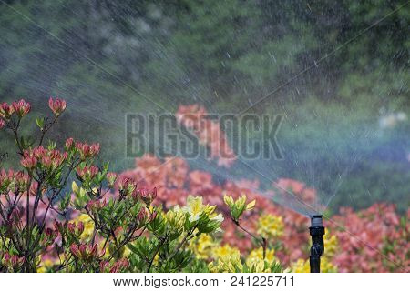 Clever Garden With A Fully Automatic Irrigation System, Water Azaleas. Background