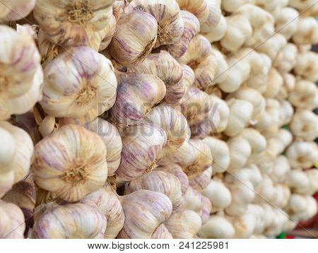 Dry Garlic Is Hanging In Row On The Market
