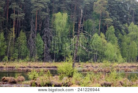 Forest In Protected Area Of Bug Landscape Park On The Bug River In Masovian Voivodeship Of Poland